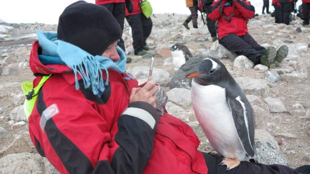 A curious penguin gets up close and personal with Tracy Hickman, a rare experience for anyone who visits Antarctica.