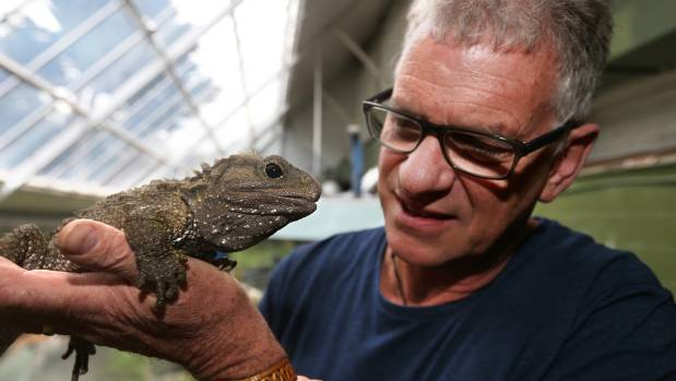 Southland Museum and Art Gallery Tuatara curator Lindsay Hazley with a tuatara at the museum.