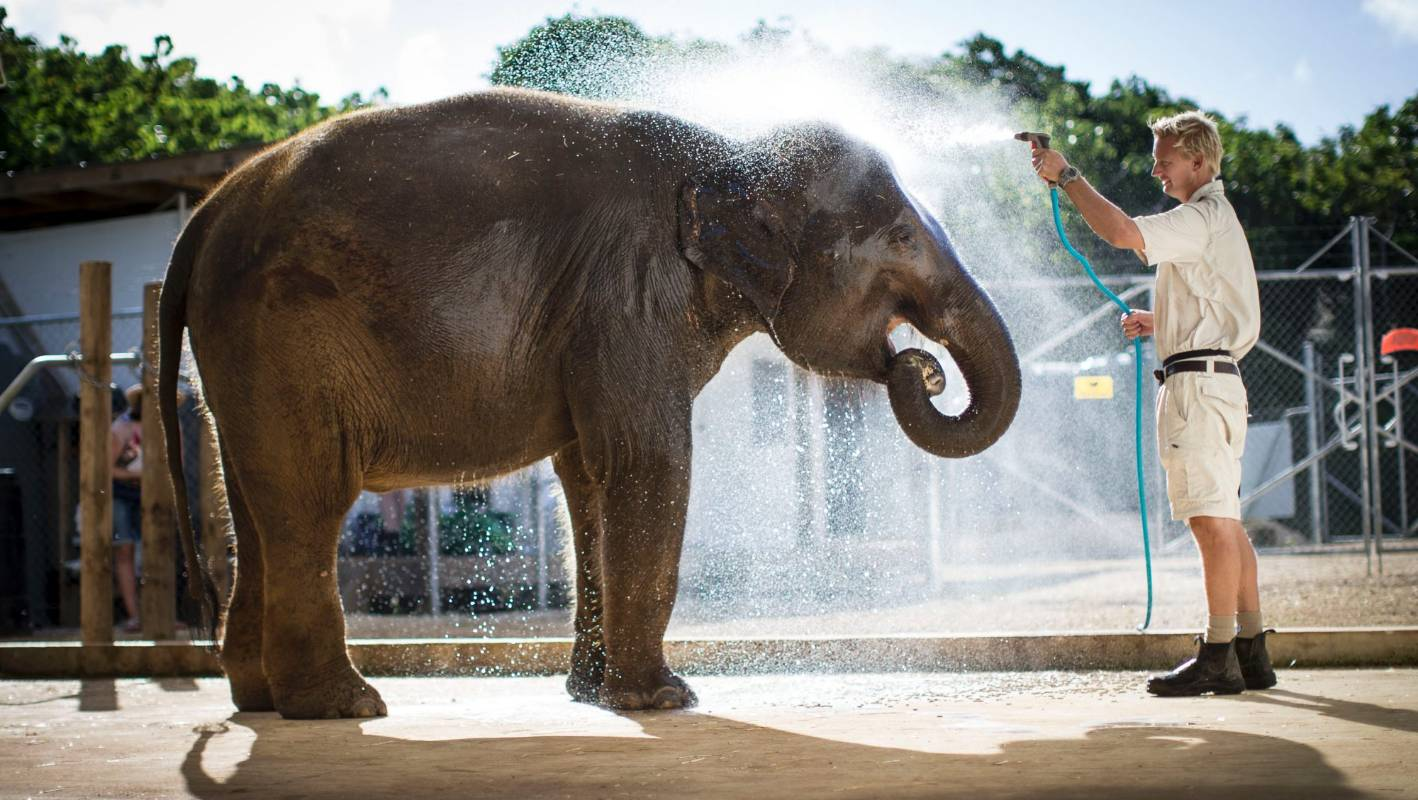 Protest Stops Sri Lankan Elephant Bound For Auckland Zoo