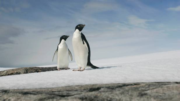 Thousands of penguin chicks starve in Antarctica