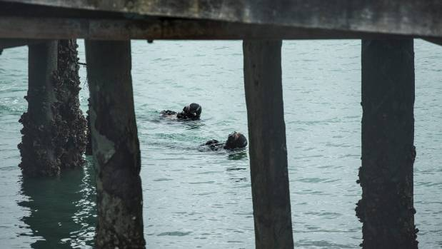 A police dive team investigates the scene where a car has been found in the wharf at Port Nelson.