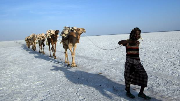 """This """"white gold"""" is the principal resource of the Danakil."""