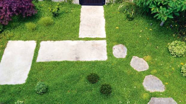 In the front garden, the rich green carpet doesn't need mowing - it is a blend of ground covers Selliera radicans and ...