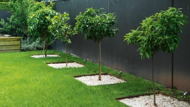 Five citrus trees – lemon, mandarin, orange, grapefruit and lime – are planted in sunken Corten steel planters topped ...