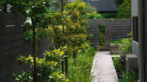 The vitex boardwalk, surrounded by Dietes bicolor and Dietes grandiflora irises.