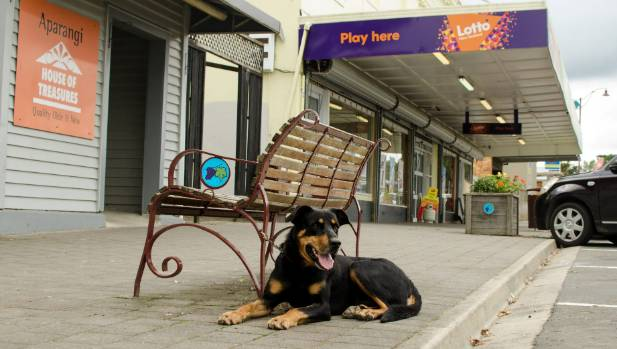 Huntaways, not cavoodles, get tied to park benches as owners shop at Four Square.