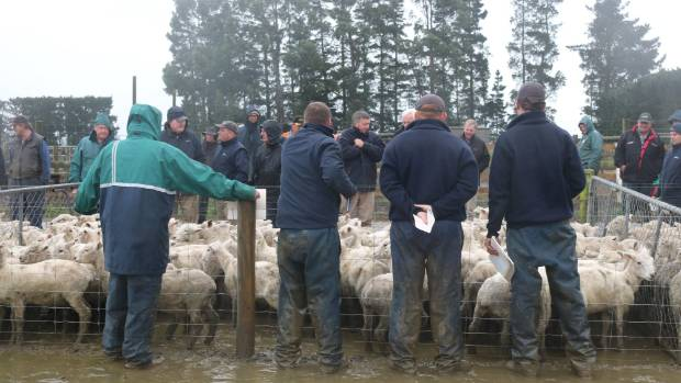Bad weather didn't put off the punters at the Wrightco Farm lamb sale.
