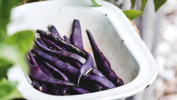 Purple beans.