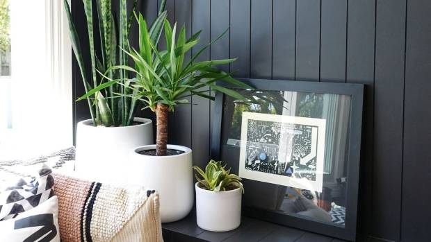 Indoor plants A revolution