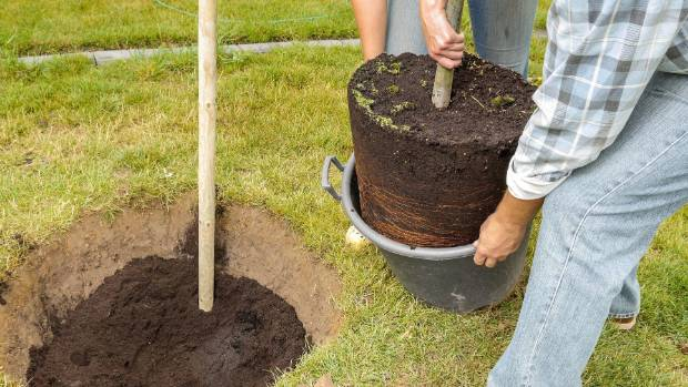 Autumn is the perfect time to plant fruit and ornamental trees.