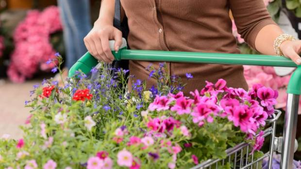 Fill your garden centre trolley with winter-flowering plants to keep your garden colourful when cold weather hits.