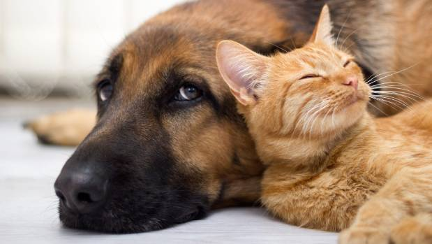 Ninety per cent of pets experience at least one emergency in their lifetime.