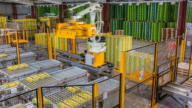 EastPack packs and ships over 30 million trays of kiwifruit.