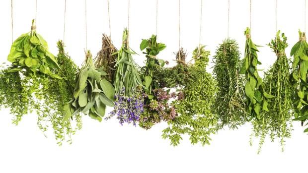 Harvest the last of the summer herbs and dry them for use in the winter.