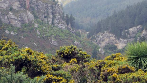 Otago Trotters Gorge is alive with colour but dead to mobile users.