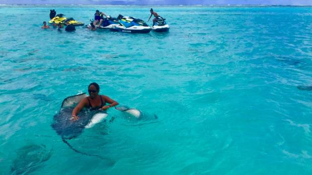 The boat's captain, Taina, dives in first to round up the stingrays, feeding them bait.
