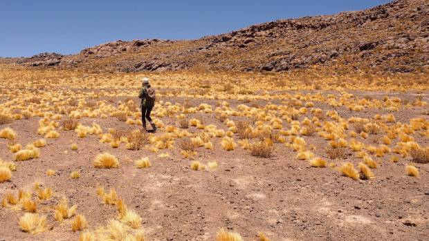 Capur Salt Flats in Chile's Atacama Desert.