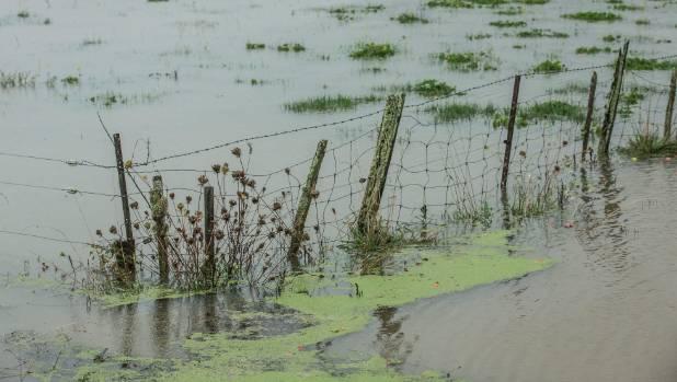 Surface flooding on a paddock near Riwaka, Tasman during recent heavy rains.
