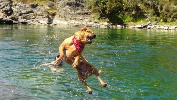 Summer can be a dangerous time for any dogs wanting a swim in the rivers of Hawke's Bay.