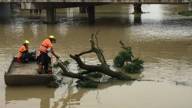 Workers remove a tree in the Taylor River on Thursday afternoon.