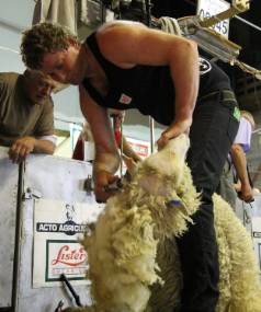 Tony Coster competed in the open shearing final and was part of the victorious New Zealand team in the test match ...