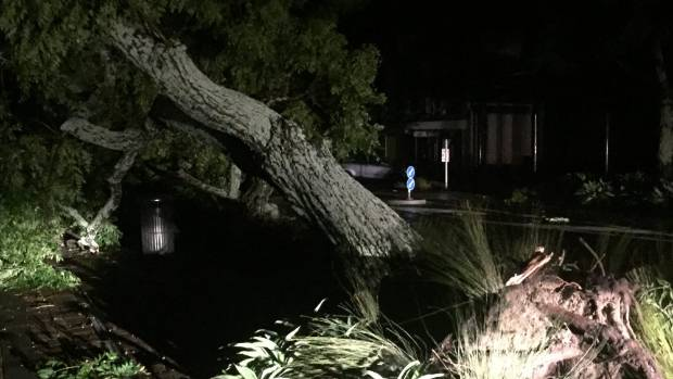 Wellington may no longer be facing the worst of Cyclone Cook, but the damage continues in Bay of Plenty, where a tree ...