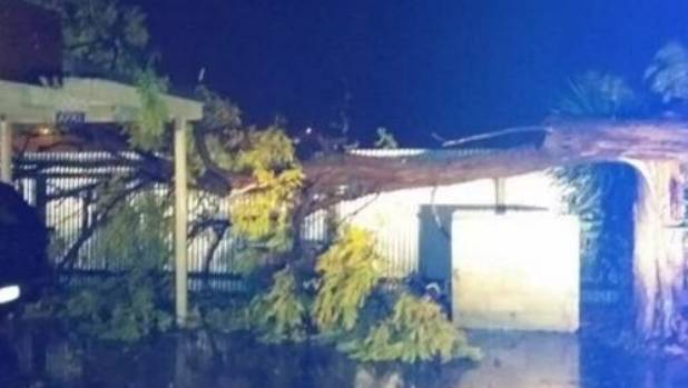 A tree narrowly missed this home's carport and garage in Longlands, Hastings.