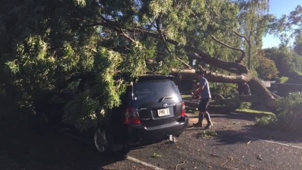 Cyclone Cook brought trees down on cars on Lucknow Road in Havelock North.
