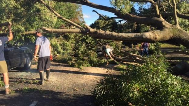 Residents of Lucknow Rd work to remove the large tree on Friday morning.