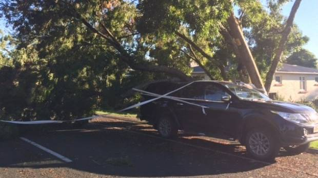 Not everybody escaped ex-Cyclone Cook unscathed: in Hawke's Bay, gales brought trees down on cars and 15,000 households ...