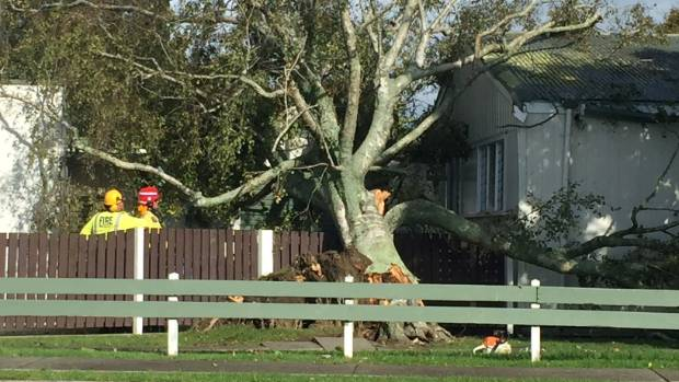 The Fire Service attempt to remove a tree toppled onto Edgecumbe School during Cyclone Cook.
