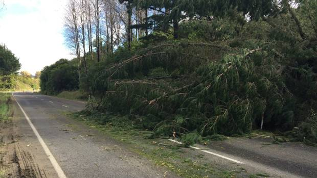 A fallen tree blocks one lane of SH2 a few kilometres north of Morere, between Wairoa and Gisborne.