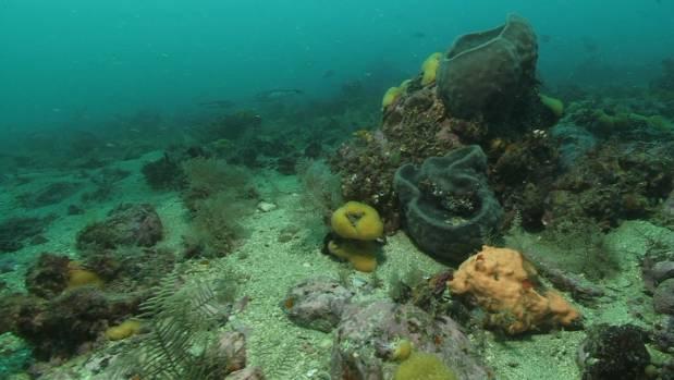 What lies beneath: Life below the surface in Waitata Reach.