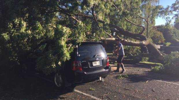 Cyclone Cook brought trees down on cars on Lucknow Road in Havelock North as it traversed the North Island at night on ...
