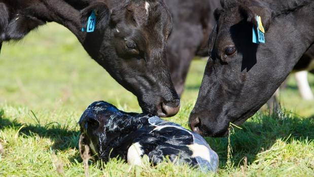 Canada: Trump wrong when he says dairy practices unfair