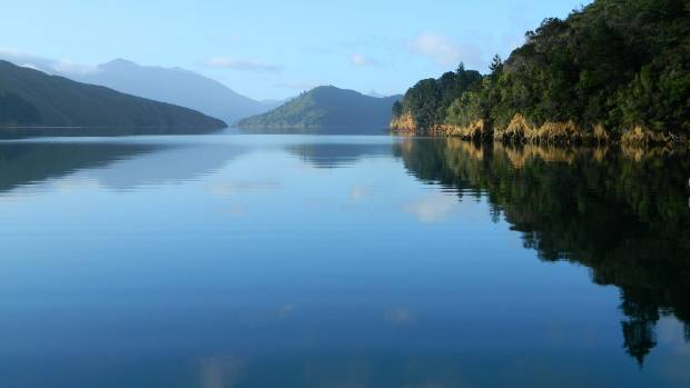 Pelorus Sound, where five salmon farms may be relocated.