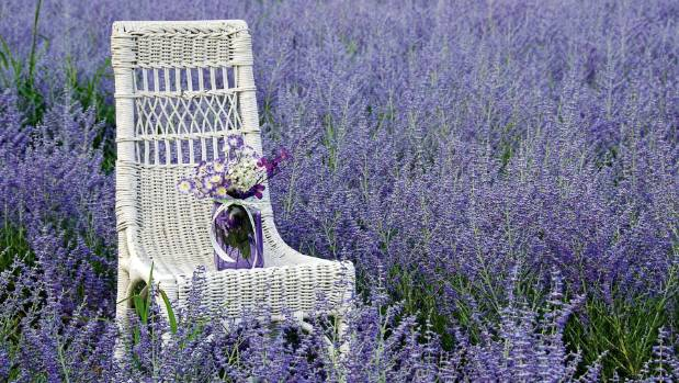 Russian sage is a shrubby perennial blooms later in the season, producing upright silver stalks topped with lilac spikes.