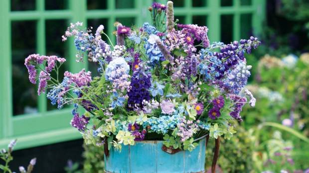 In My Dry Blue Garden I Can Grow Oodles Of Delphiniums Asters Statice