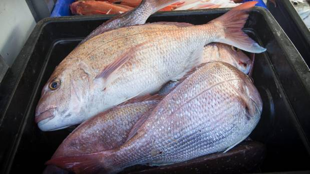 Fresh snapper will be available on George's deliveries.