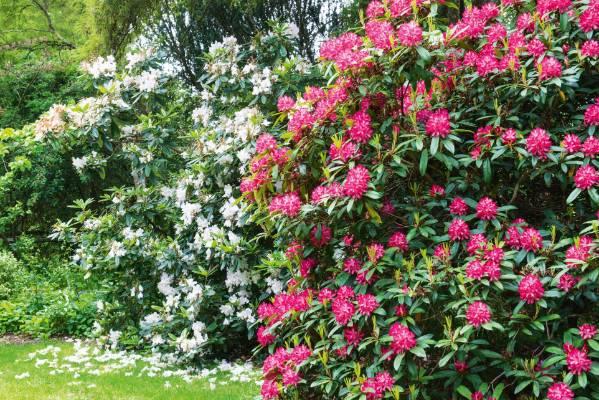 Garden at historic homestead Loudon in Lyttelton.