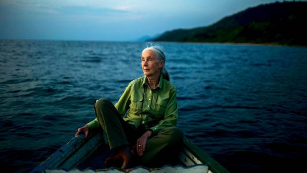 leadership profile, jane goodall essay What is jane goodall's roots & shoots and how can your class get involved why is community mapping important to service learning how can you attend a virtual field trip with the jane goodall institute or skype with a member of the roots & shoots national youth leadership council member in the.