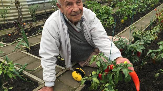 The cold temperatures and heavy rain have proved difficult vegetable growing conditions for retired New Plymouth ...