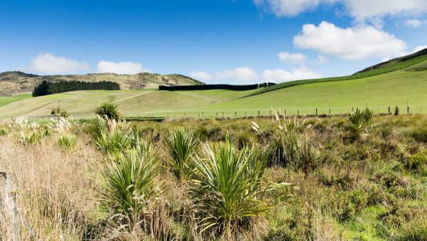 A wetland has been created in a gully previously full of willows on the Matthews family farm near Waikari, North Canterbury.