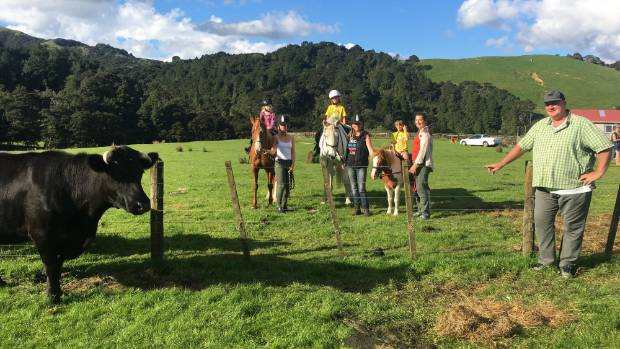 Friday has a new job at Ecopony Retreat with owner Kevin O'Connor, far right, and manager Jodi Townend, centre.