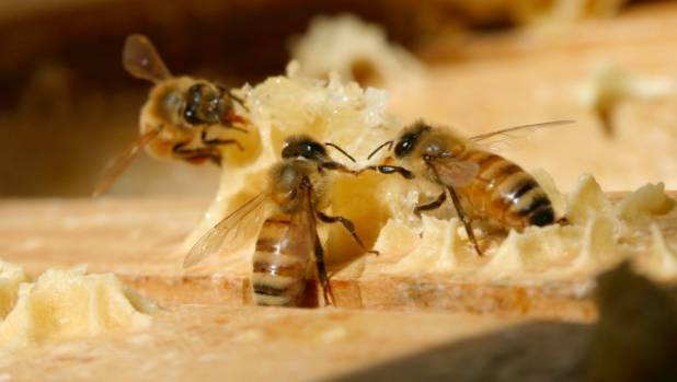 The 2016-17 season has proved to be the poorest for honey production in a decade, according to Apiculture New Zealand.