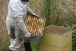 A beekeeper checks hives on Otago Peninsula during a season when many hives have struggled to produce enough honey to ...