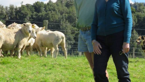 Waikato perendale stud ram breeders Philip and Audrey Brandon are pursuing the genetics pathway in the fight against ...