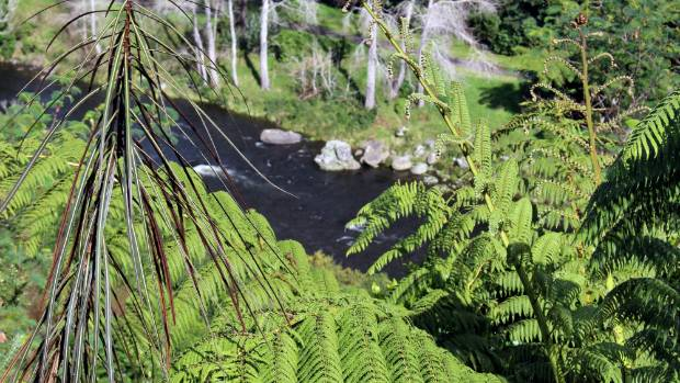A glimpse of the Waiwhakaiho River through native plantings.