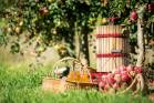 Cider-making is enjoying a resurgence.