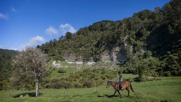 It's wild country where Horses at Pukatea Hill is run.